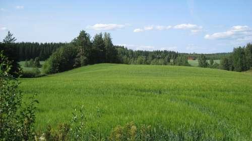 Finnish Summer Field Cornfield Green Blue Sky