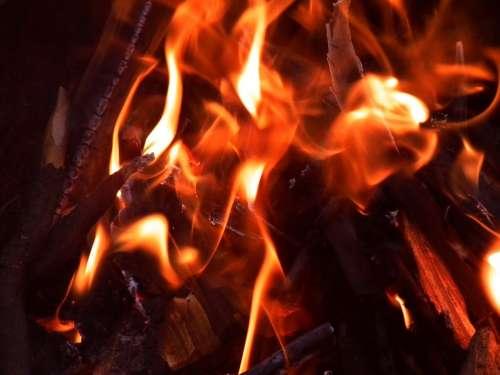 Fire Koster Burns Coal Coals Fever Bbq Ash