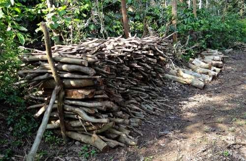 Firewood Fuel Stack Forest Kodagu India
