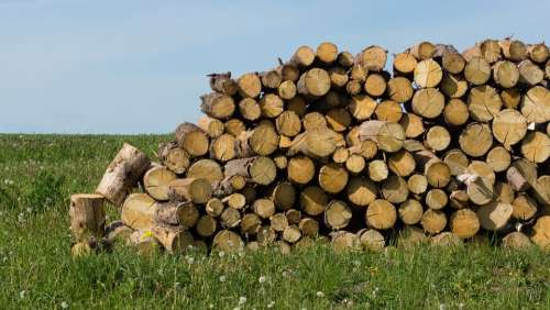 Firewood Tree Billet The Sawed Down Wood