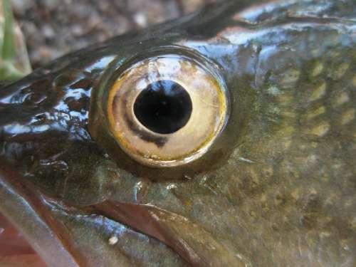 Fish Fisheye Nature Animals