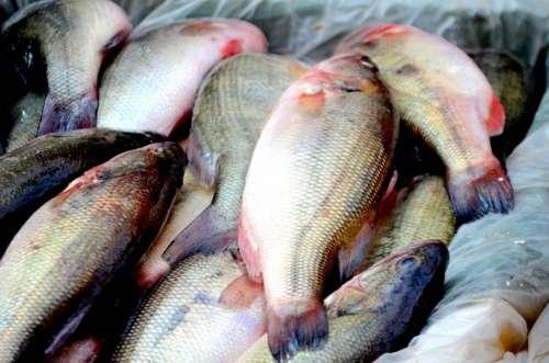 Fish Animals Seafood Food Business Market