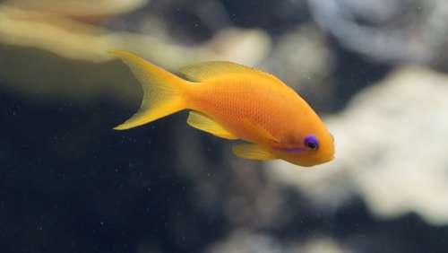 Fish Orange Purple Aquarium Small Underwater