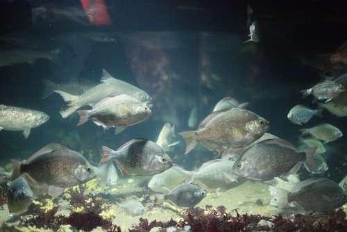 Fish Aquarium Water Underwater Marine Wildlife