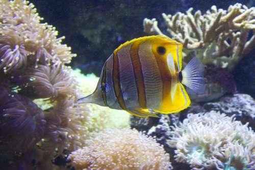 Fish Stripy Water Aqua Marine Underwater Sea