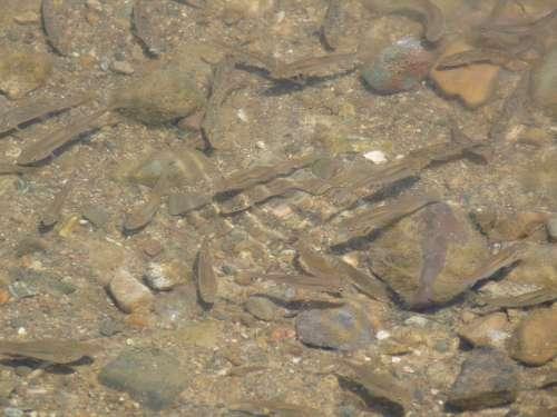 Fish Shoal River Underwater Water Nature Animal