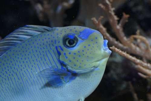 Fish Close Up Portrait Aquarium Underwater
