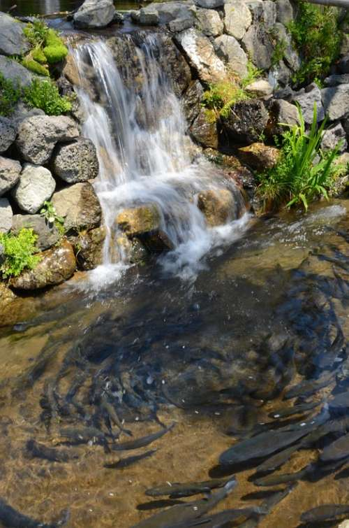 Fish Water Stone