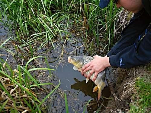 Fishing Kite Carp Fish South Bohemia Ledenice