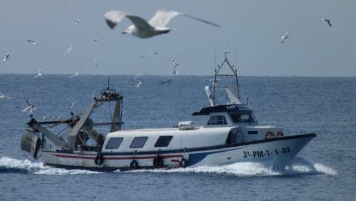 Fishing Boat Gulls Sea Birds Fish Catch