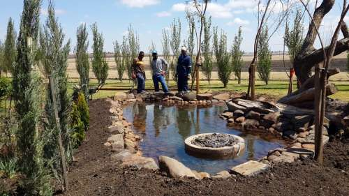 Fishpond Pond Fish Pond Pool Biotope Artificial