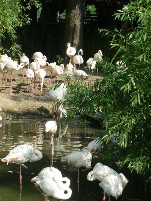 Flamingo Zoo Pink Flamingo Flamingos Exotic Nature