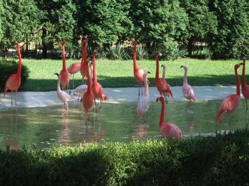Flamingo Zoo Animals Orange Red Pink