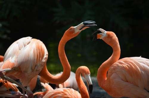 Flamingos Animal Bird Nature Zoo Animal World