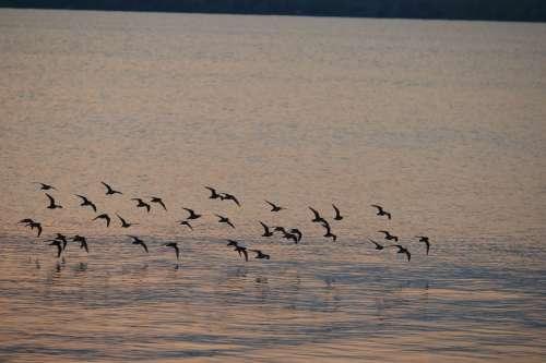 Flock Birds Lake Beautiful Park Pond