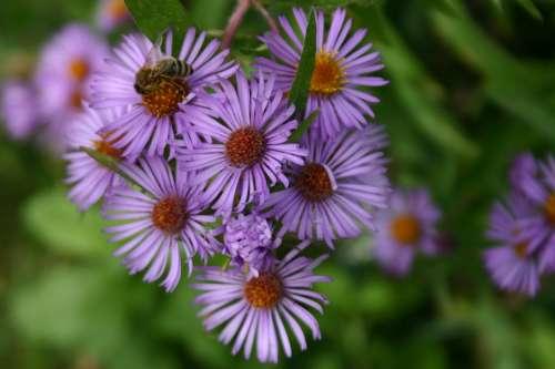 Floral Flowers Purple Nature Blooms Close-Up