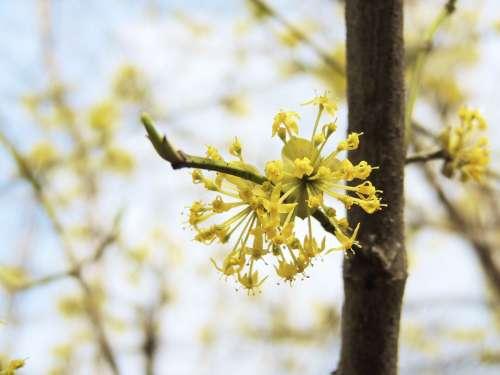 Blossom Bloom Flower Fruegling Yellow Color