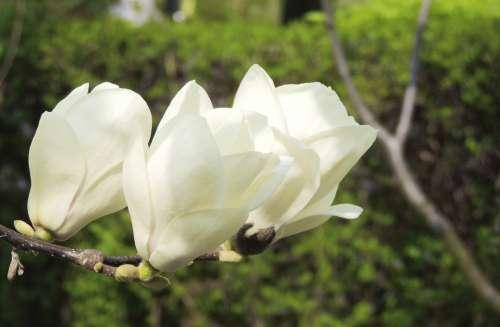 Flower White Blossom Bloom Plant Nature Spring
