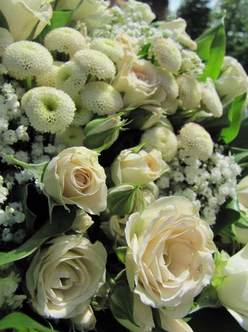 Flower Rose Green White