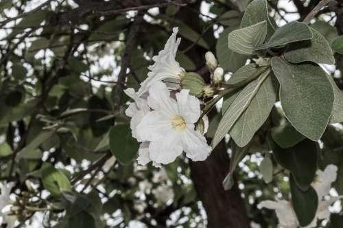 Flower Flowers Summer Flowers White Nature