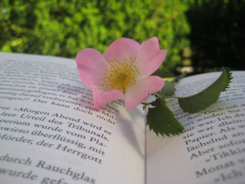 Flower Nature Book