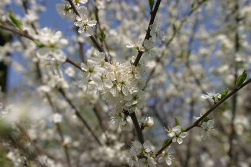 Blossom Bloom Spring Flowers Nature Plant