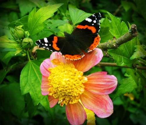 Flower Butterfly Flowers Insect Butterflies