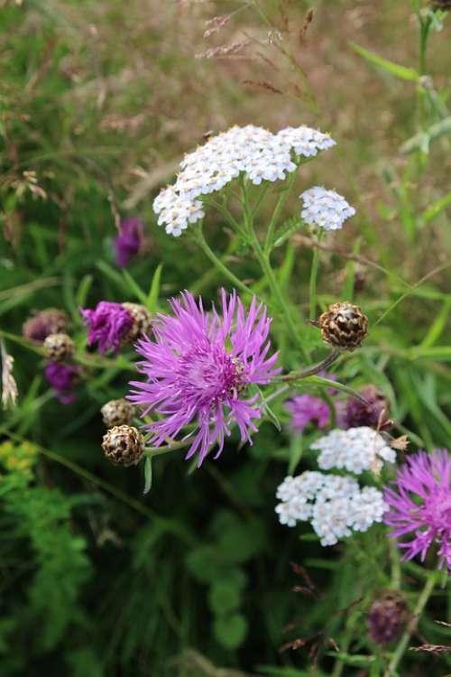 Flower Nature Plant Color Blossom Bloom Flora
