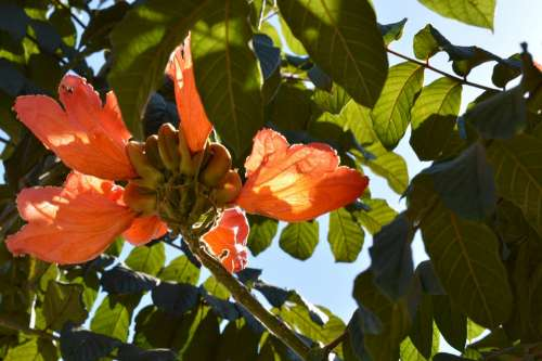 Flower Flying Sol