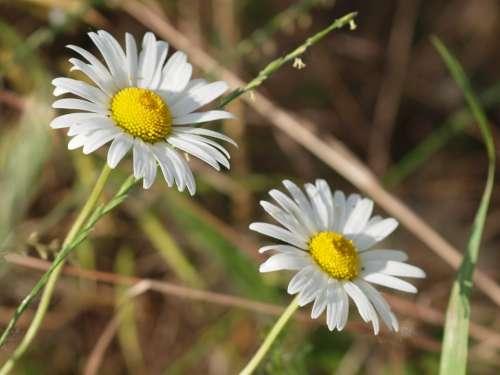 Flower Meadow Spring