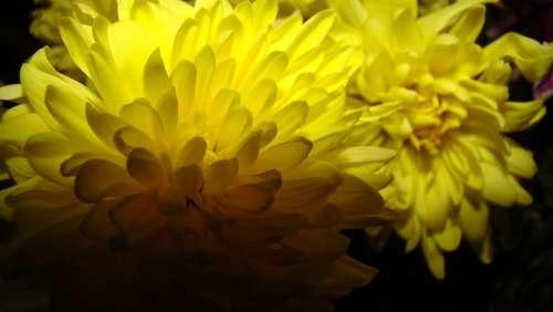 Flower Yellow Nature Garden Petal Light