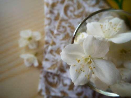 Flower Jasmine White Summer Flowers Flowers