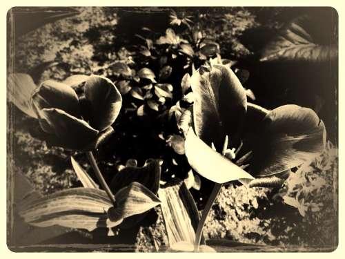 Flower Vintage Old Nature Antique