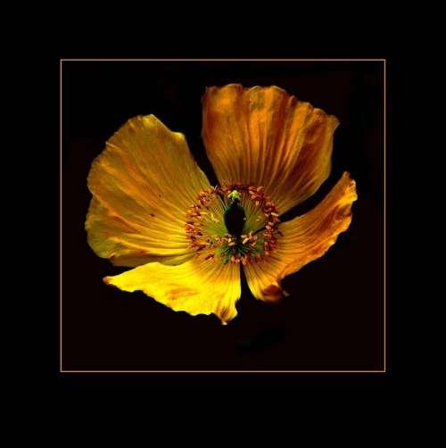 Blossom Bloom Macro Garden Flowers Plant Flower