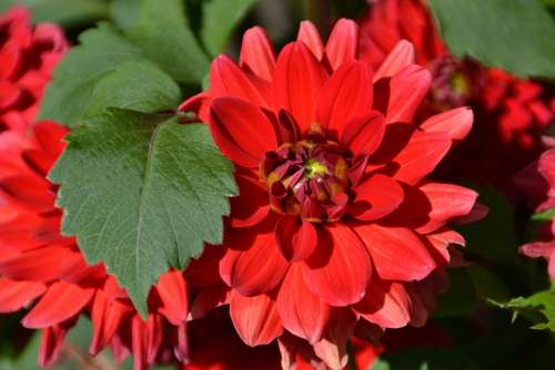 Flower Red Love Garden Summer Bloom Blossom