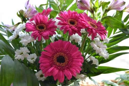 Flower Flowers Daisy Posy Pink Bunch