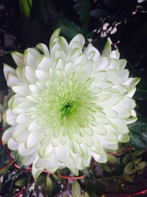 Flower White Nature Plant Party Luck Hobby