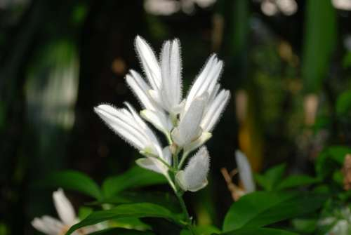 Flower Blossom Nature White Petal Garden
