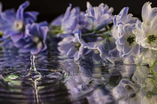 Flower Flowers Purple Flower White Water Purple