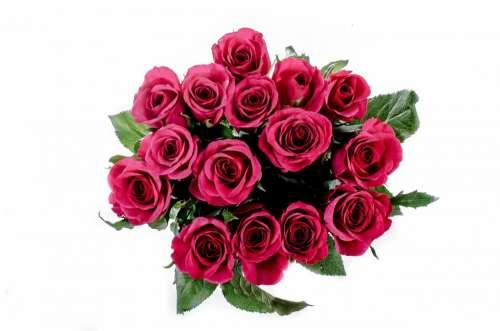 Flower Flowers Rose Love Decoration Nature