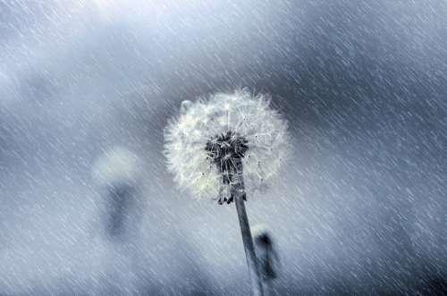 Flower Rain Wet Drops Droplet Spring Light Sun