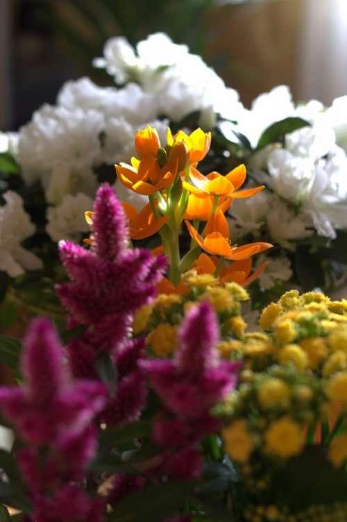 Flower Spring Seedling Fresh Fragrant Colors