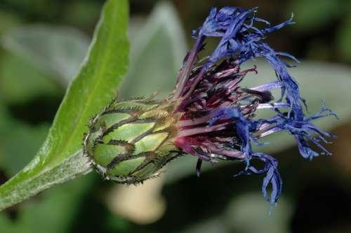 Flower Wilted Shriveled Nature Flowers Wild Flower