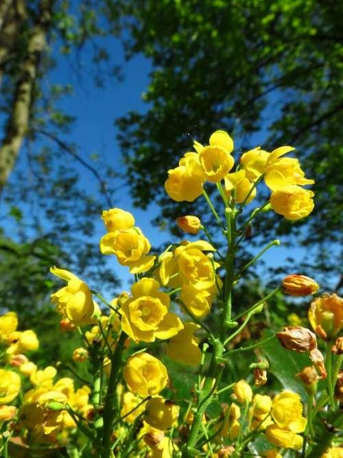 Flower Nature Colorful Yellow Macro Summer