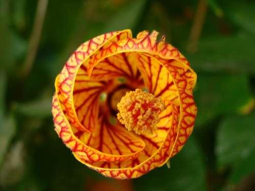 Flower Orange Red Nature Texture