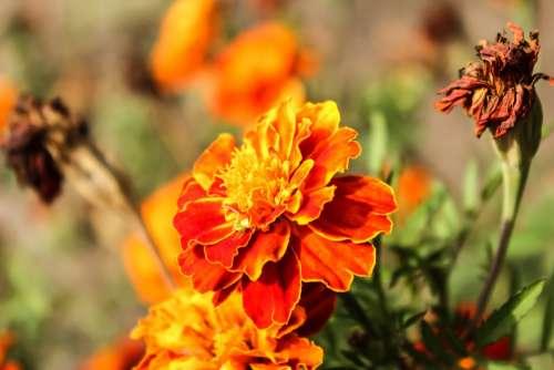 Flower Orange Colorful Nature Petals Garden