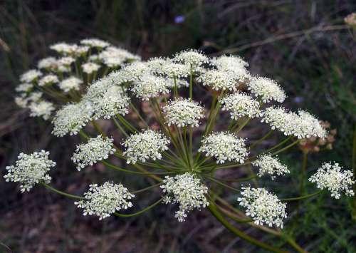 Flower White Green Nature Foreground Macro