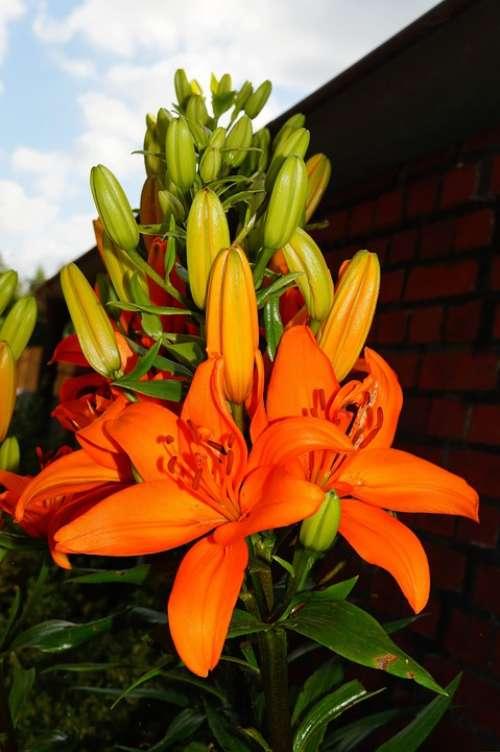 Flower Flowers Orange Bright Pistil Filigree