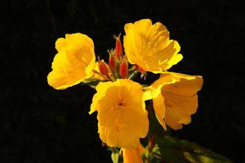 Flower Flowers Yellow Bright Close Up Plant
