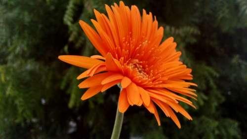 Flower Orange Plant Floral Bloom Blossom Close-Up